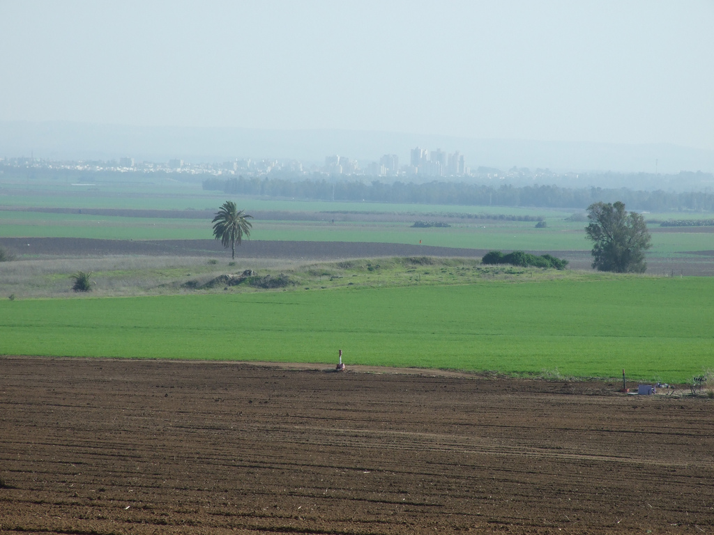 'Ibdis - عبدس : A view of the hill on which the village stood