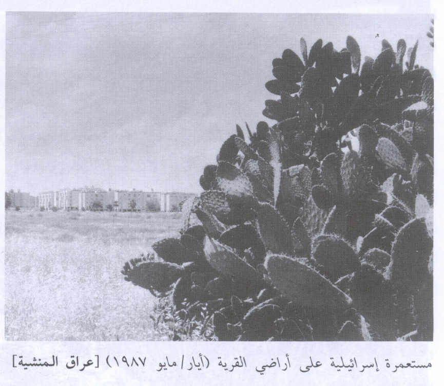 'Iraq al-Manshiyya - عراق المنشية : General View Of The Destroyed Village In 1987
