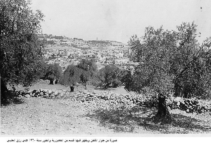 Abu Dis - أبو ديس : This is a photo of Abudis Betania Olive mounth (Altur)