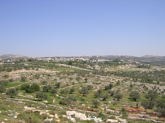 Bil'in - بلعين : General view