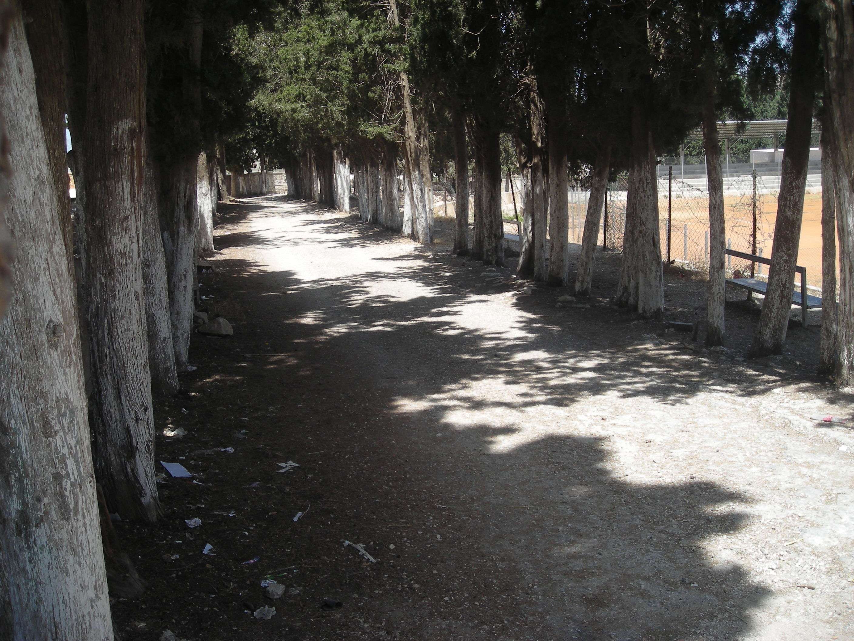 Dayr Ghassana - دير غسّانه : the enterance of dair ghassaneh's school ,the trees was planted by saif aldeen albarghouti (رحمه الله)