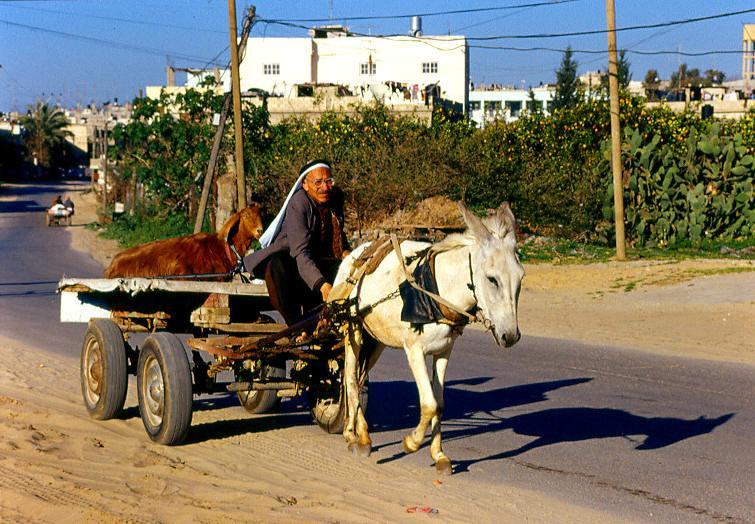 ���� ����� ������ Gaza-11217.jpg