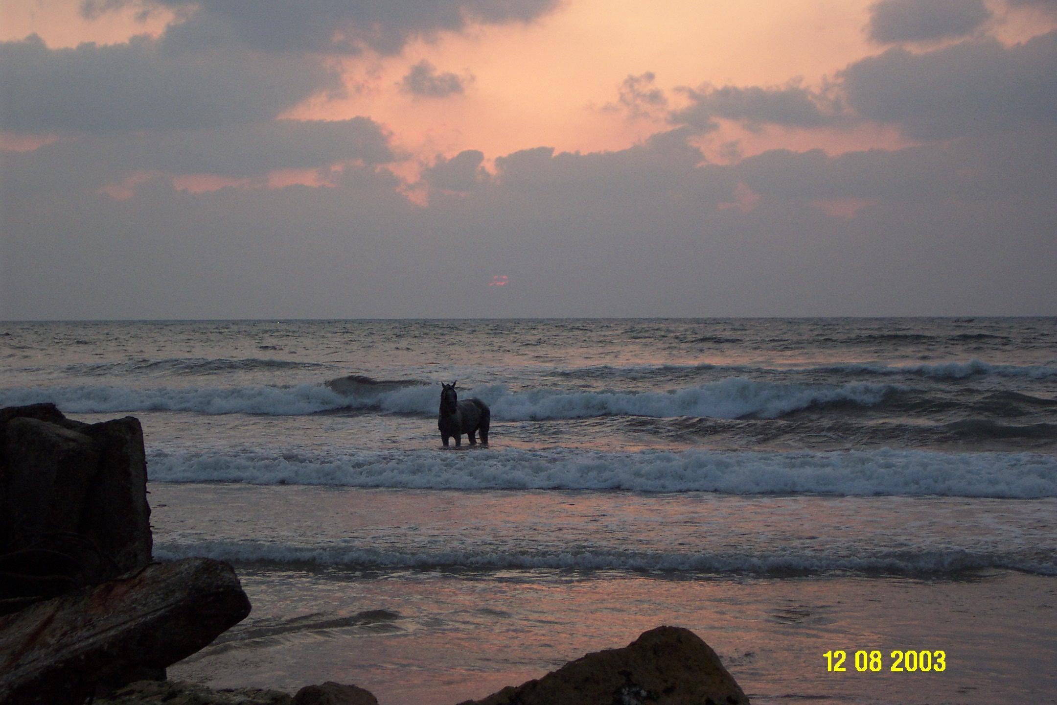 ���� ����� ������ Gaza-11237.jpg