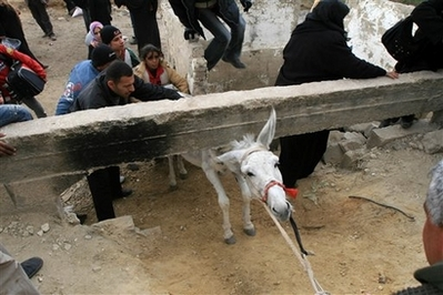 Gaza Jail Break - فك طوق الأسر عن اهل غزة : Poor donkey, how can we help?