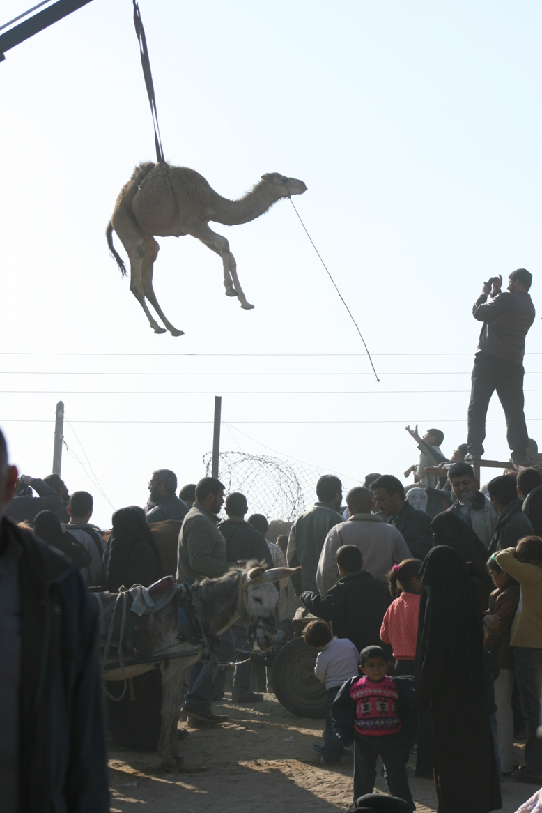 Gaza Jail Break - فك طوق الأسر عن اهل غزة : Once the STARVATION WALL came down, Camels can fly. Who needs tunnels any more!!!