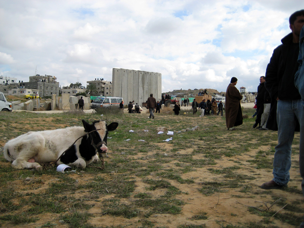 Gaza Jail Break - فك طوق الأسر عن اهل غزة : That is Mubarak : The Laughing Cow. Helpless, it does according to American, European, and Israeli dictation. He is helpless, poor cow.