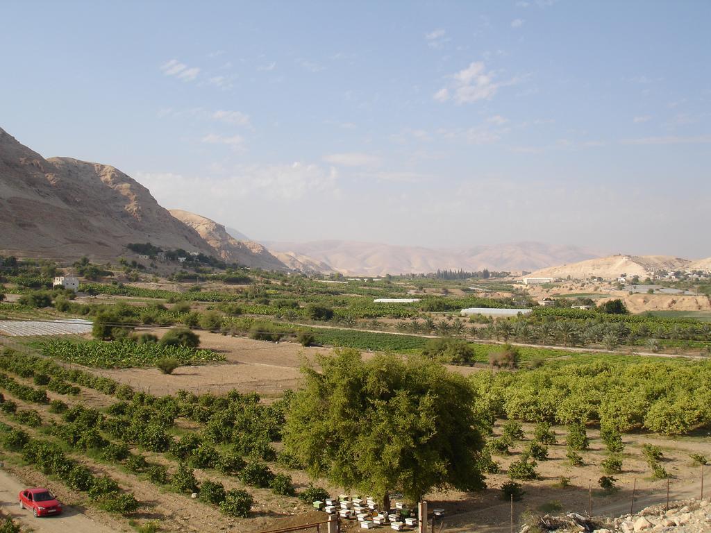 فلسطين إسطورة يكتبها التاريخ Jericho-11347