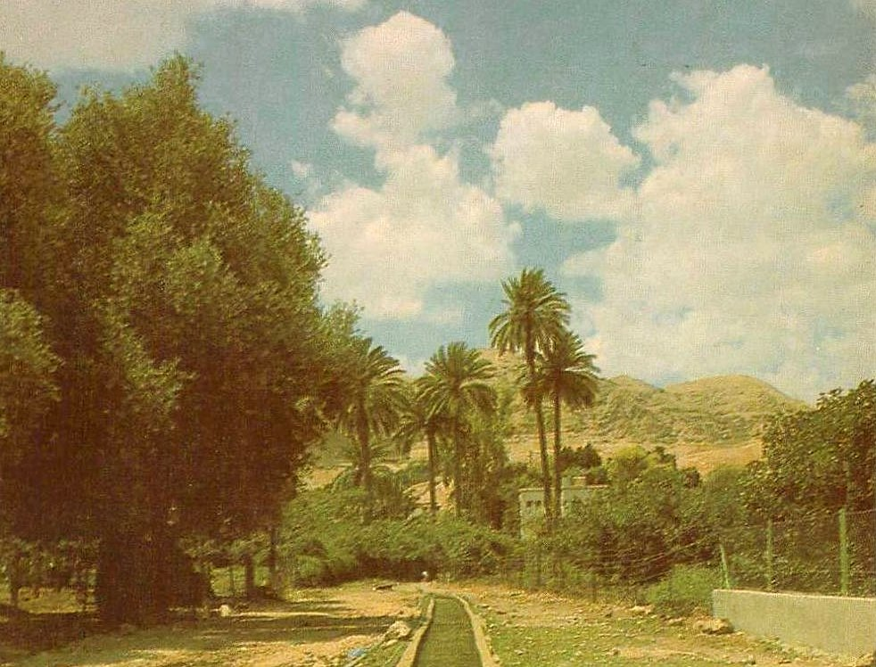 Jericho - أريحا : A watering canal, Jericho