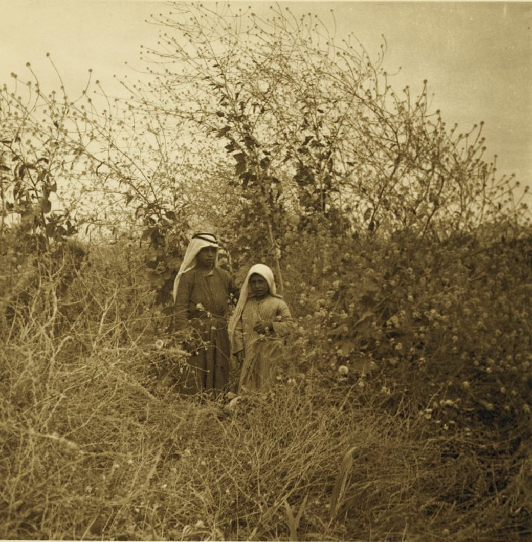 Jericho - أريحا : JERICHO - Arabs of the Jordan valley near Jericho and a mustard plant, 1937