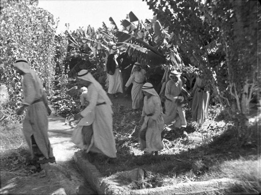 Jericho - أريحا : JERICHO - The Arabs of Jericho and their banana plantations 3, early to mid 20th c.