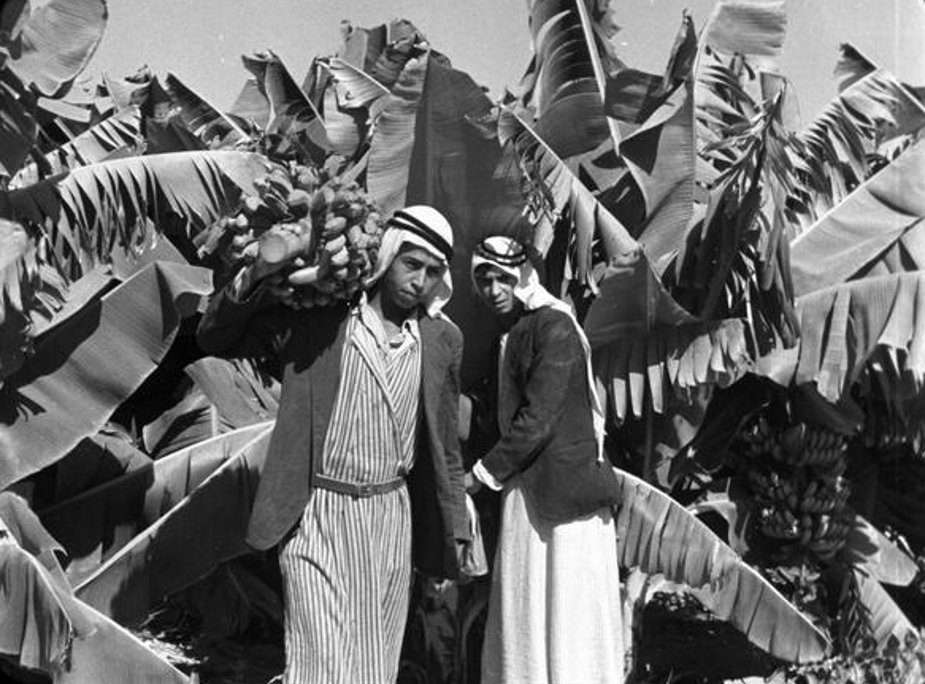 Jericho - أريحا : JERICHO - The Arabs of Jericho and their banana plantations 6, early to mid 20th c.