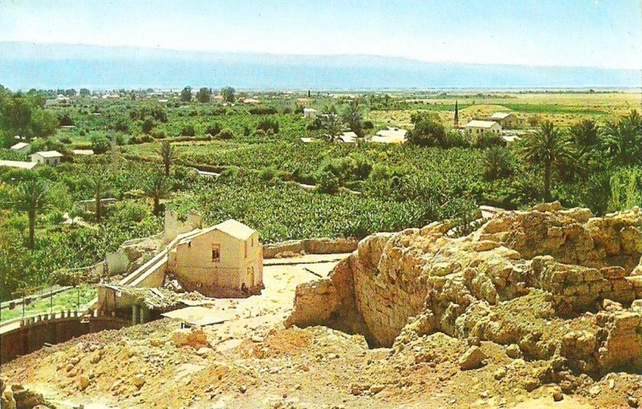 Jericho - أريحا : JERICHO - 1960s 13 (View of the oasis from the ancient hill)