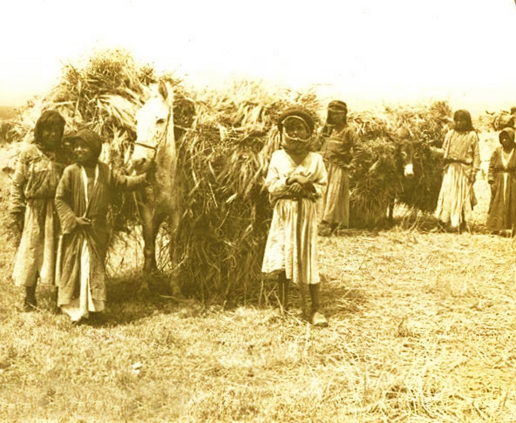JININ - Late 19th, early 20th c. 26 - Palestinian children harvesting wheat and bringing in the sheaves, circa 1900