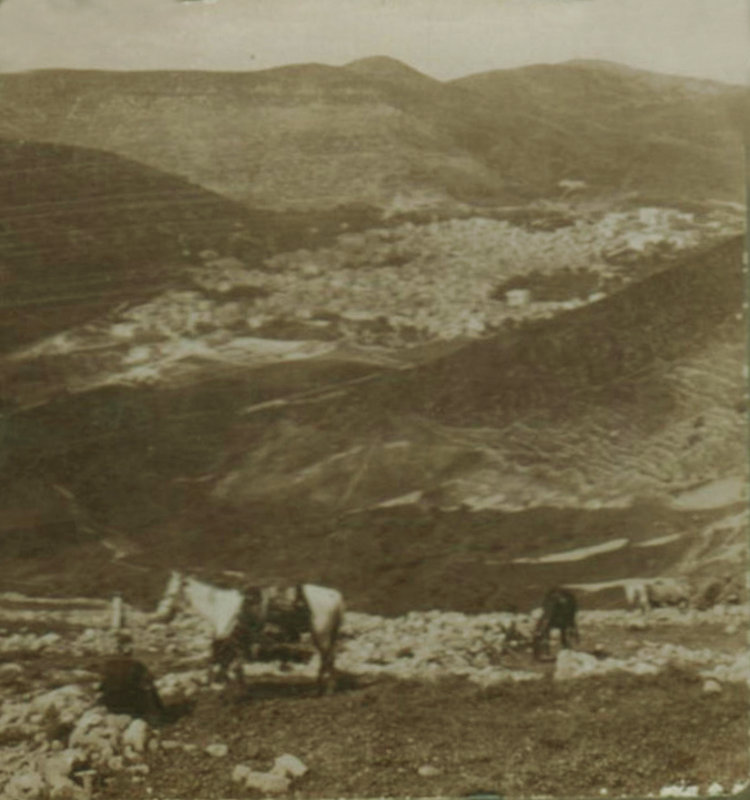 Nablus - نابلس : NABLUS - Late 19th, early 20th c. 23 - Distant view of Nablus valey, 1890s