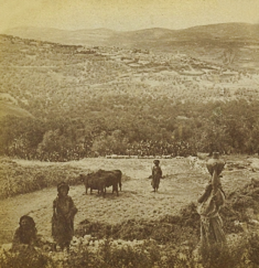 Nablus - نابلس : NABLUS - Late 19th, early 20th c. 50 - Arab farmers in Palestine working in fields outside Nablus, surrounded by fig and olive groves, 1890s
