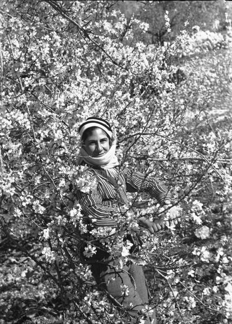 Nablus - نابلس : NABLUS - 1939-45 (4) - Palestinian youth amongst the blossoming trees around Nablus  (National Library of Australia)