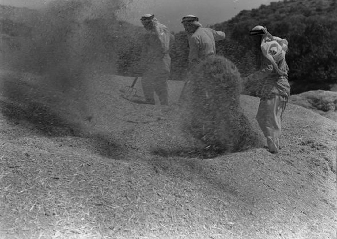 Nablus - نابلس : NABLUS - 1939-45 (7) - Winnowing grain (National Library of Australia)