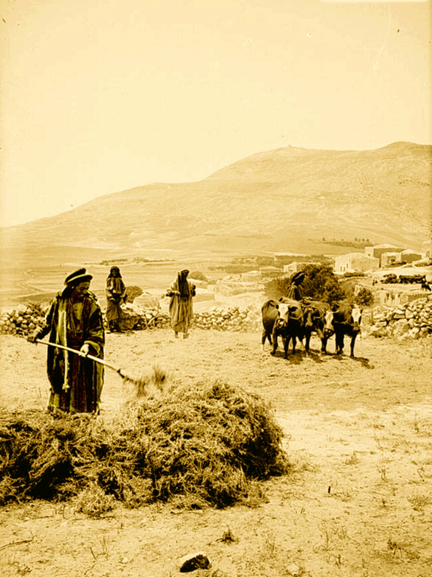 Nablus - نابلس : NABLUS - Late 19th, early 20th c. 108 - Threshing floor at the Eastern part of Nablus valley