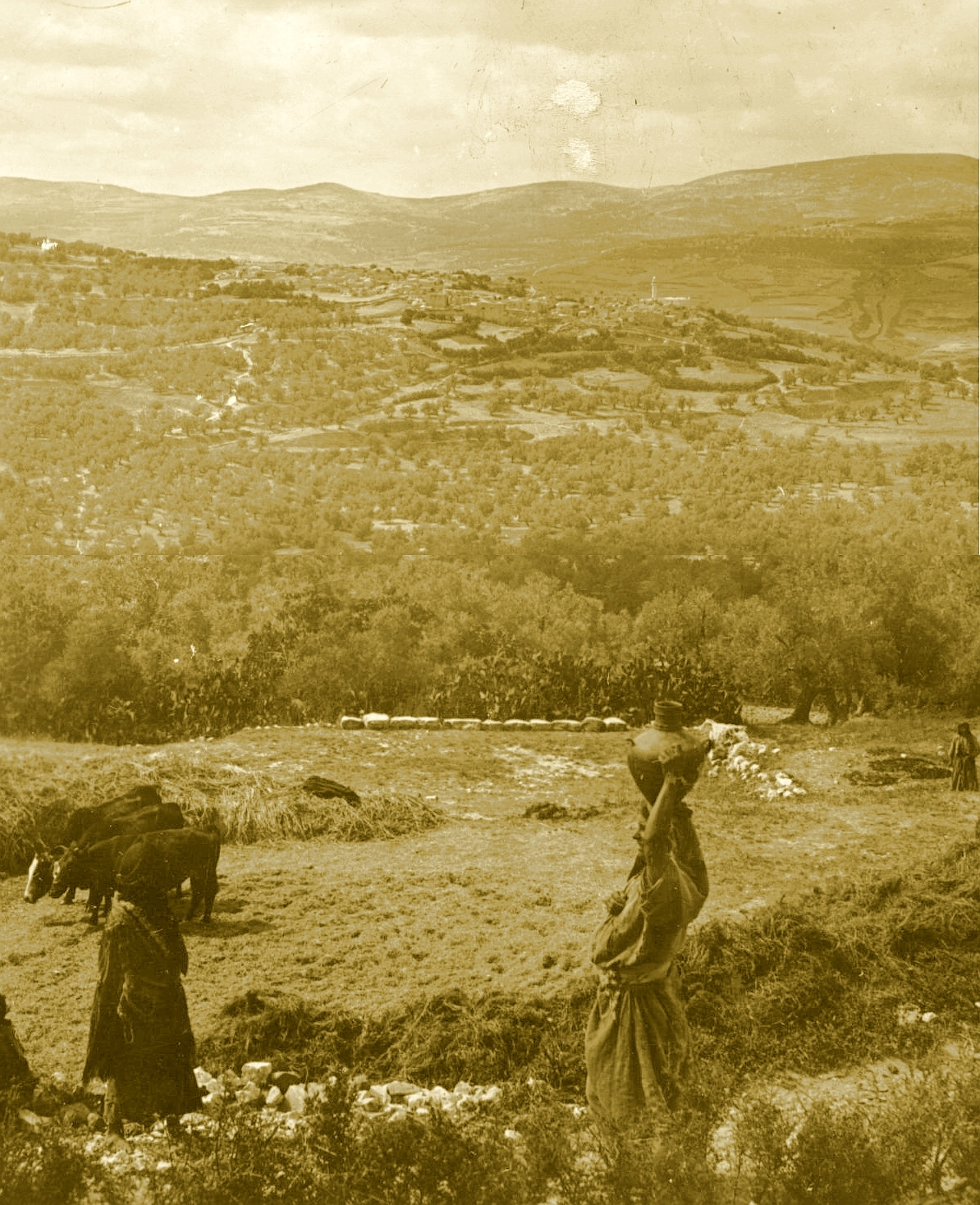 Nablus - نابلس : NABLUS - Late 19th, early 20th c. 109 - Palestinian farmers amongst their olive and fig groves in the hills N. of Nablus (Sabastia in the distance)