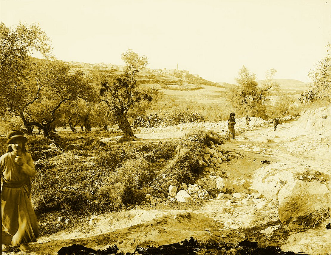 Nablus - نابلس : NABLUS - Late 19th, early 20th c. 125 - Mountain track from Nablus to Sabastiya