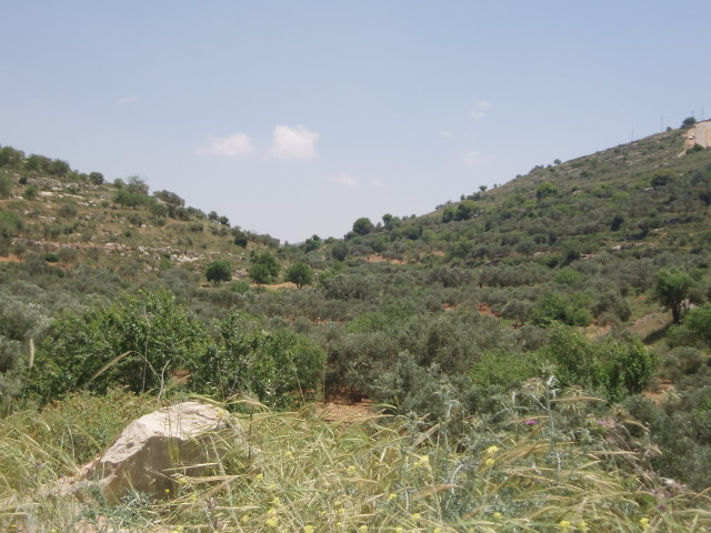 Qaryut - قريوت : the road to qaryout near the spring