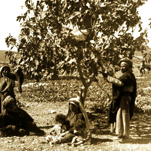 Ramallah - رام الله : Afternoon under a Fig tree, 1890s
