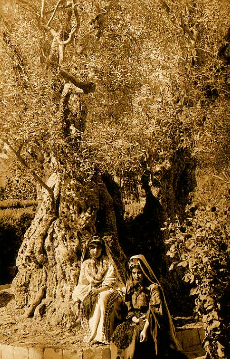 Ramallah - رام الله : Two ramallah women under an olive tree, 1890s