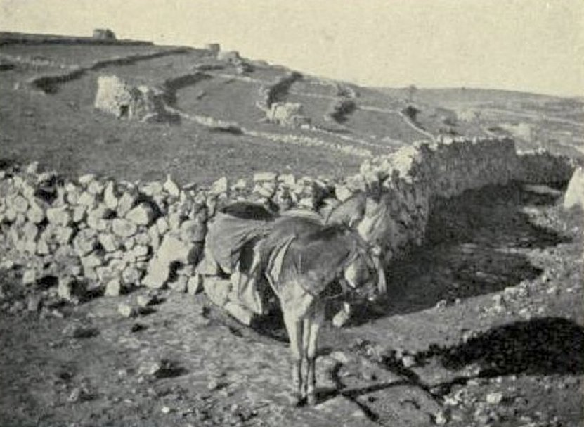 Ramallah - رام الله : RAMALLAH - Late 19th, early 20th c. - Vineyards and stone watch-towers on hills of Ramallah