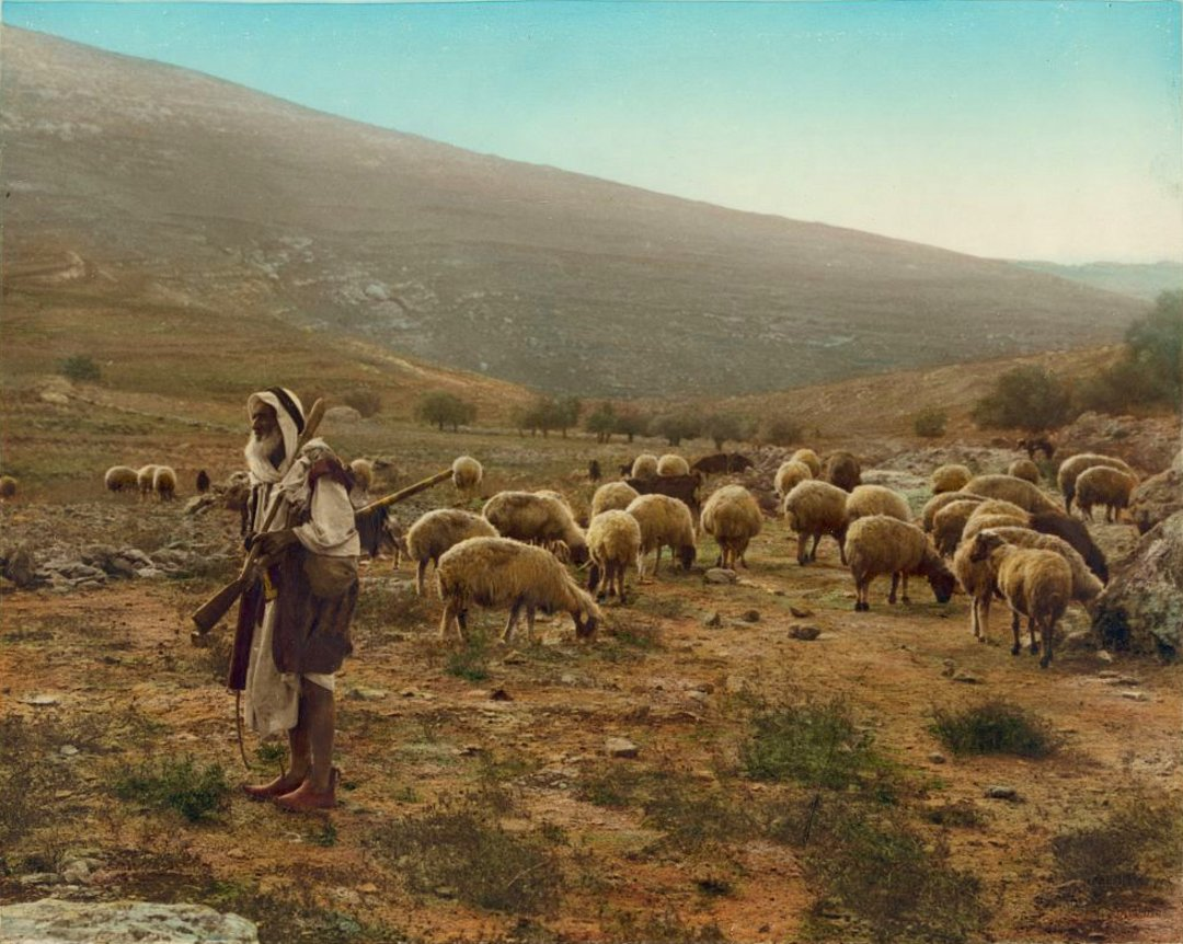 Ramallah - رام الله : Shepherd, Jerusalem-Ramallah area, early 20th. c. .