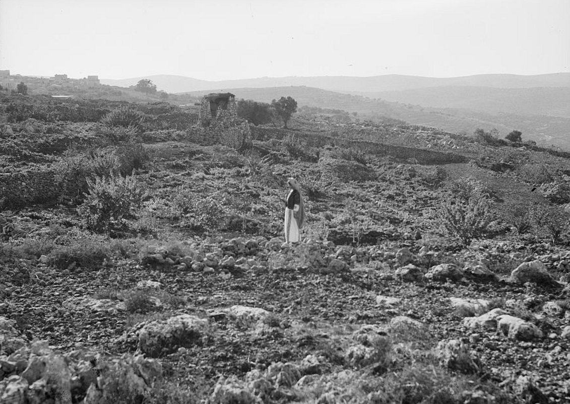 Ramallah - رام الله : Woman from the Ramallah area in mountain field 2, (at Taybeh or Ain Yabrud) - 1930s - (Matson Collection)
