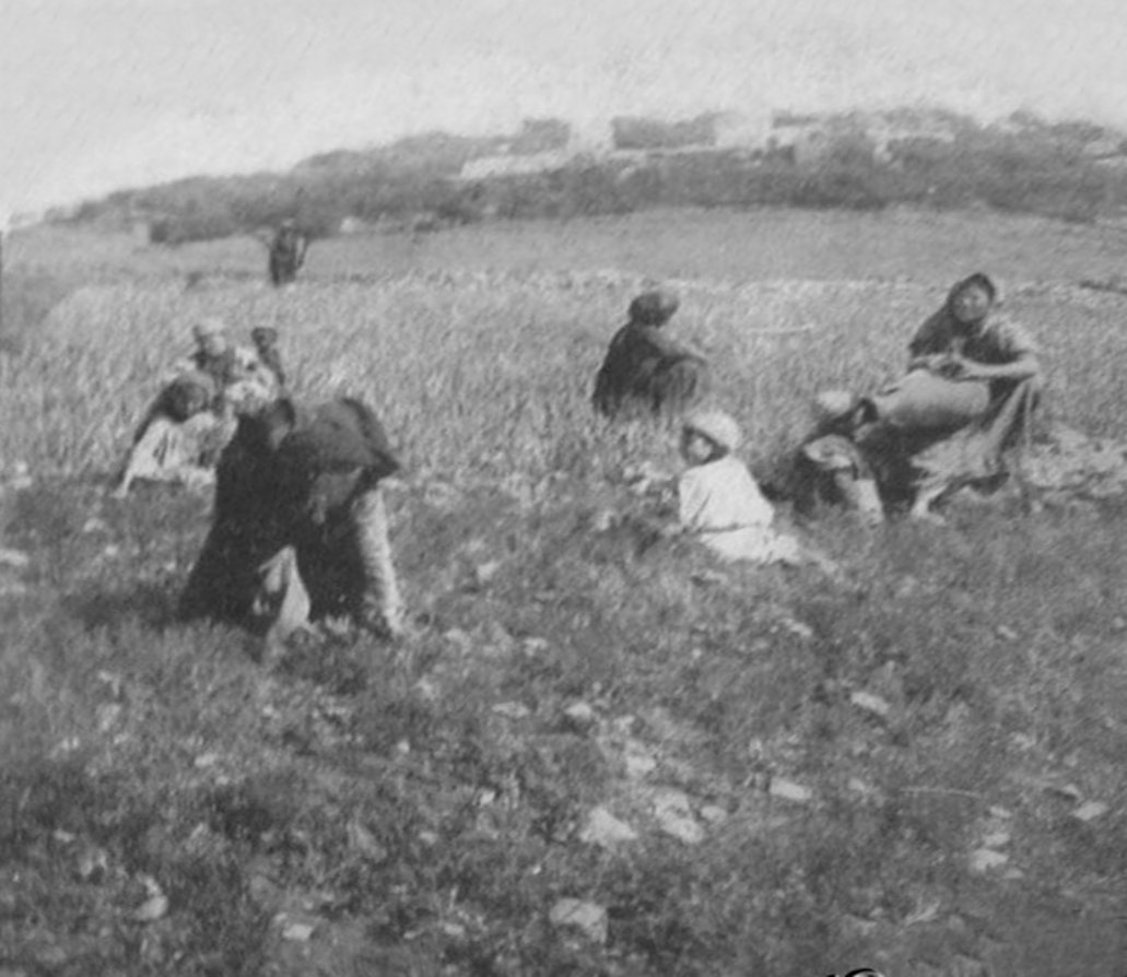 Ramallah - رام الله : RAMALLAH - Palestinians in the Ramallah area (Possibly Beitin) clearing field from thorns and stones, circa 1890s (Per Reem Ackall)