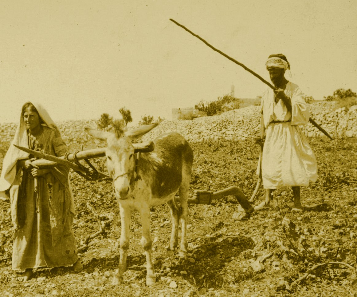 Ramallah - رام الله : RAMALLAH - A man and his wife ploughing stony field around Ramallah-Bireh, circa 1890s - Keystone-Mast Collection (Per Reem Ackall)