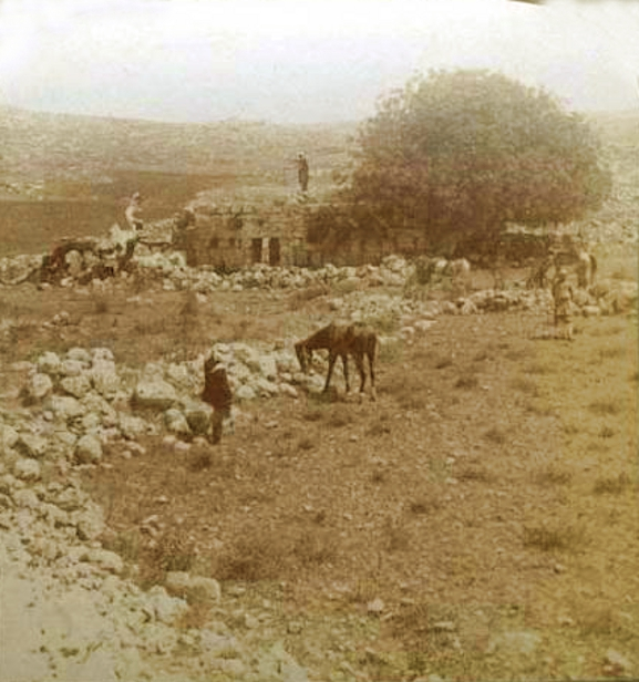 Ramallah - رام الله : Khibet Seilun in the Ramallah district, 1890s (Canaanite ruins dating back to 2000 BC) (Per Reem Ackall)