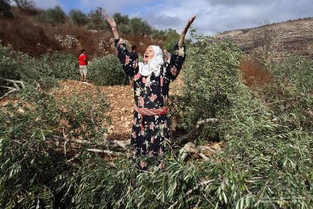 Ras Karkar - رأس كركر : Israeli colonizers just cut 40 olive trees for this village