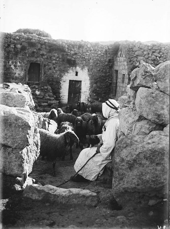 Sharafat - شرفات : Shepherd and sheep flock in fold in Sharafat from Matson Collection 1900-1926