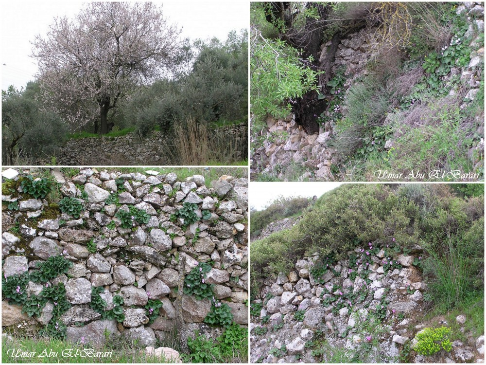 Sharafat - شرفات : Sharafat's Hand Built Stone Walls  {#3}