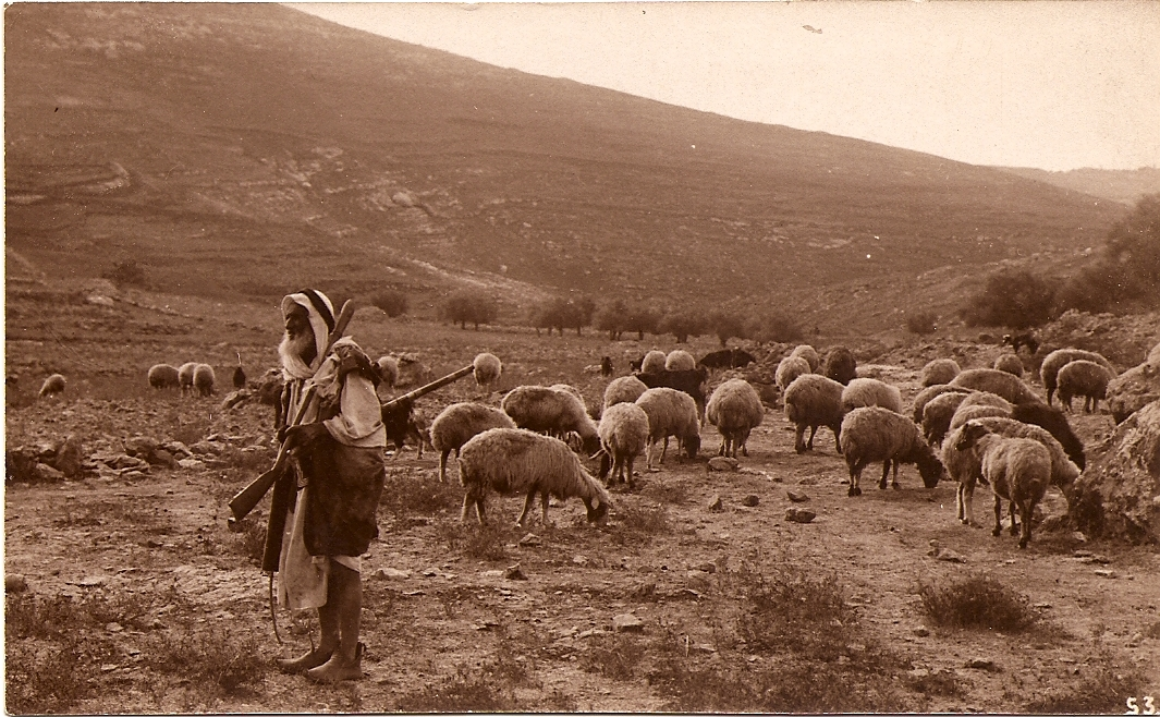'Isfiya - عسفيا  :  A shepherd with his flock of goats on Mount Carmel  1900-1910