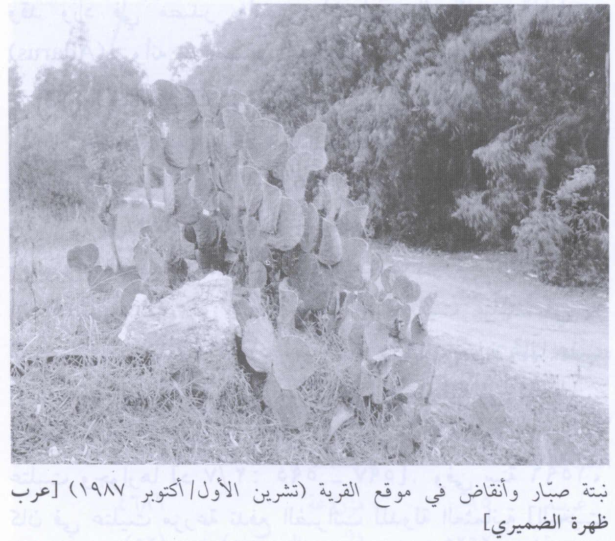 عشائر ضمرة الضمور كنانة Picture359.jpg