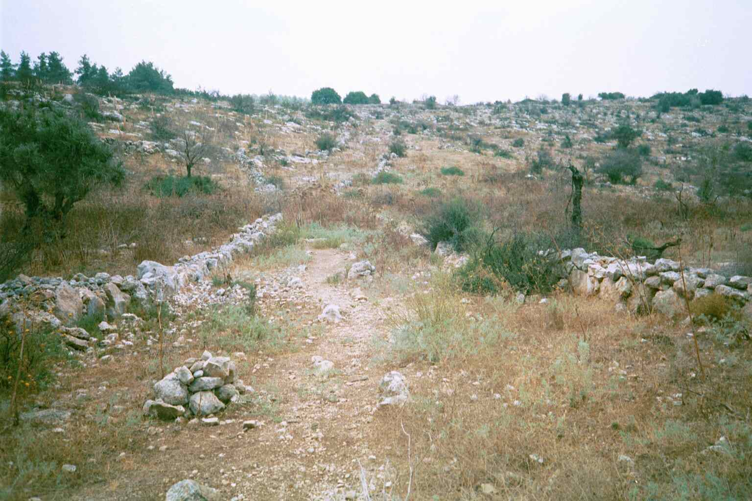 'Ajjur - عجّور : One fo the old dirt paths in 'Ajjur leading to a hill, July 2002
