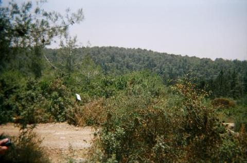 'Ajjur - عجّور : Lands of 'Ajjur, 2004