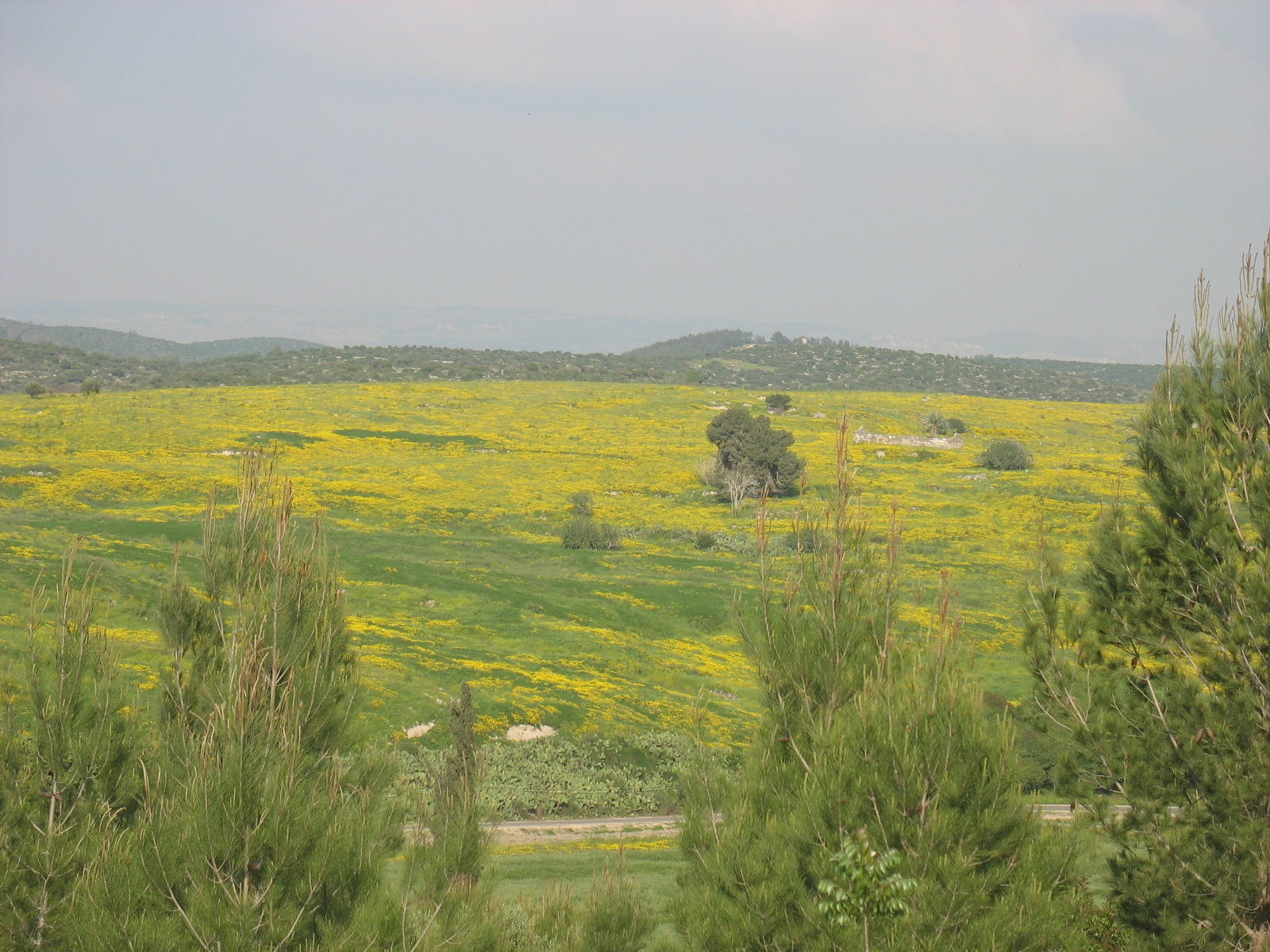 Bayt Jibrin - بيت جبرين : The beautiful landscape, the destroyed village appears in the background