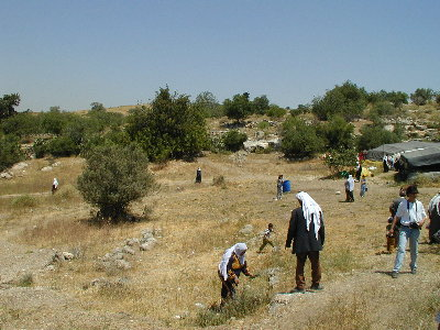 Bayt Nattif - بيت نتّيف : Bayt Nattif's original inhabitants are spread around looking for the remains of their houses