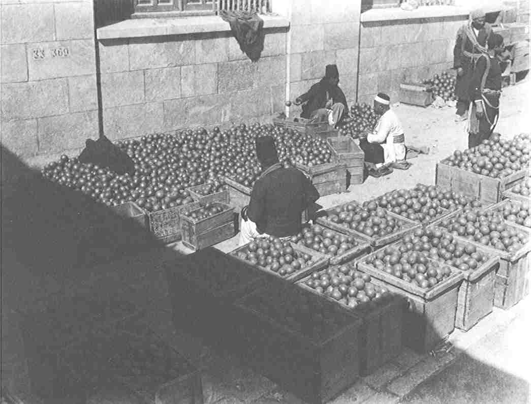 Jaffa - يافا : Sorting and Packing Jaffa's citrus in the early 1920s. Jaffa oranges used to be Palestine's major export, mainly to Europe including England, Italy, and France.