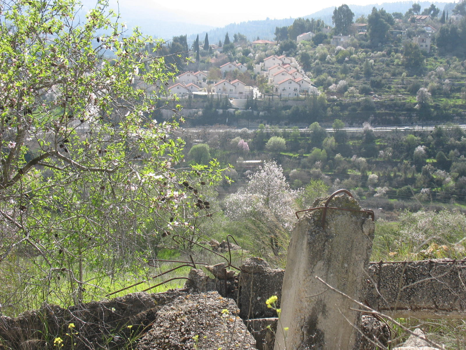 Qalunya - قالونيا : Ruins of the destroyed Palestinian village, and the exclusive Jewish colony appears in the background.