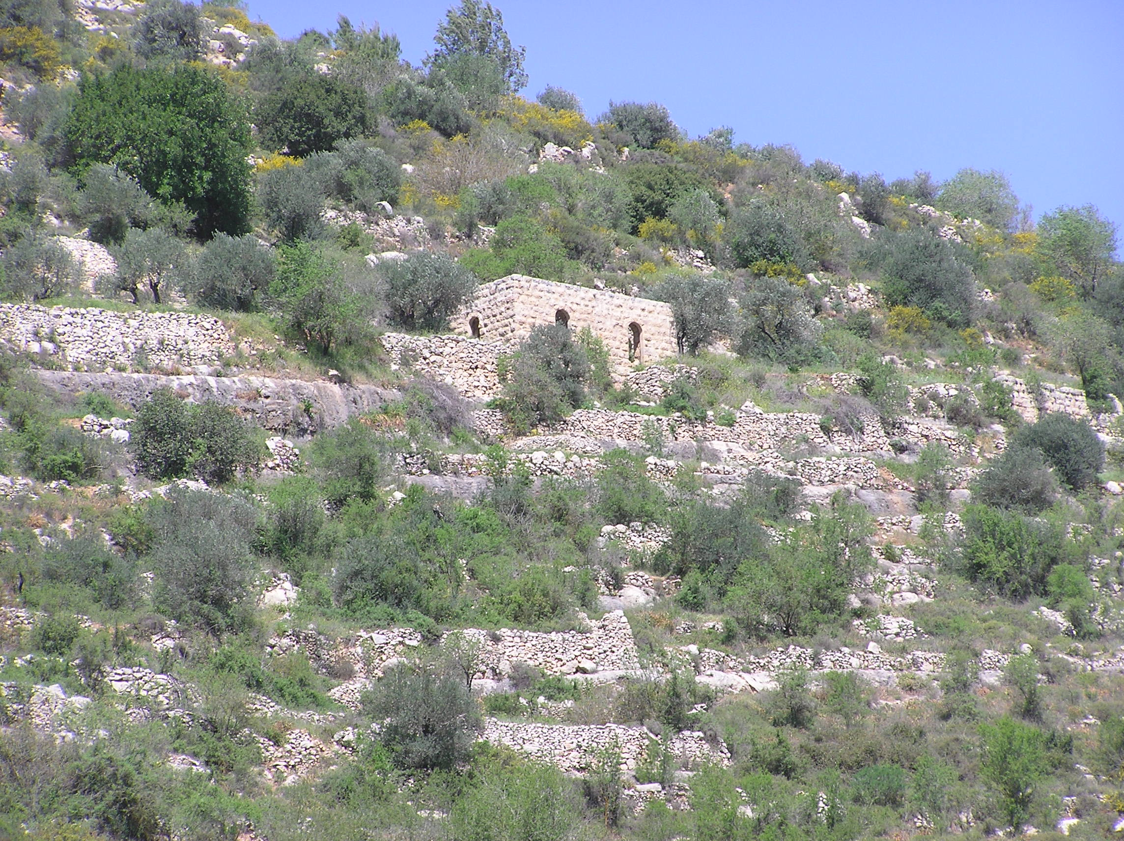 Sataf - صطاف : One of Sataff's Houses is still standing on its beautiful stone wall  terraces.