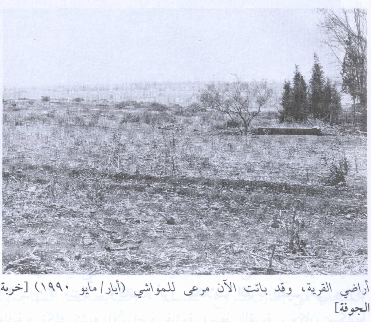 al-Jawfa, Khirbat - خربة الجوْفة : Village lands now us as pasture by Jewish settlers, 1990