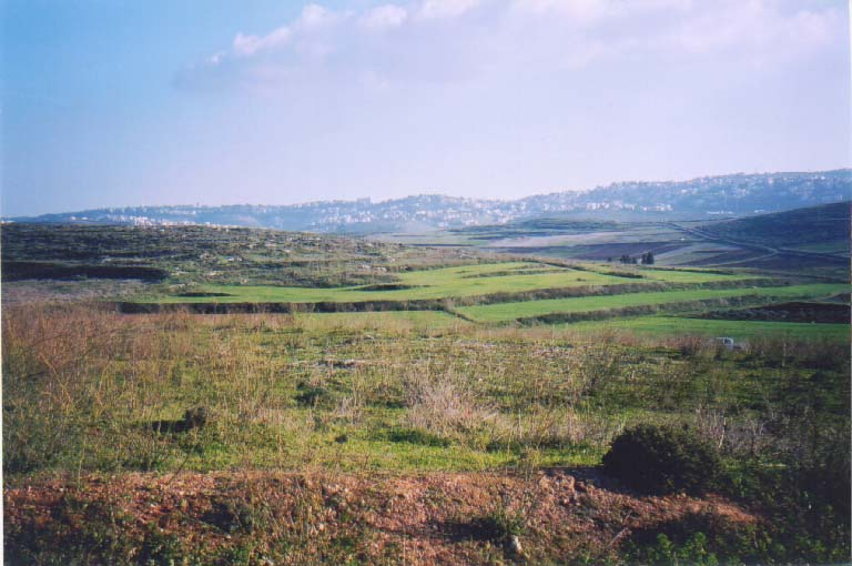 Saffuriyya - صفورية : General view of Saffuriyya;s lands, Nazareth in the backgound, 2003