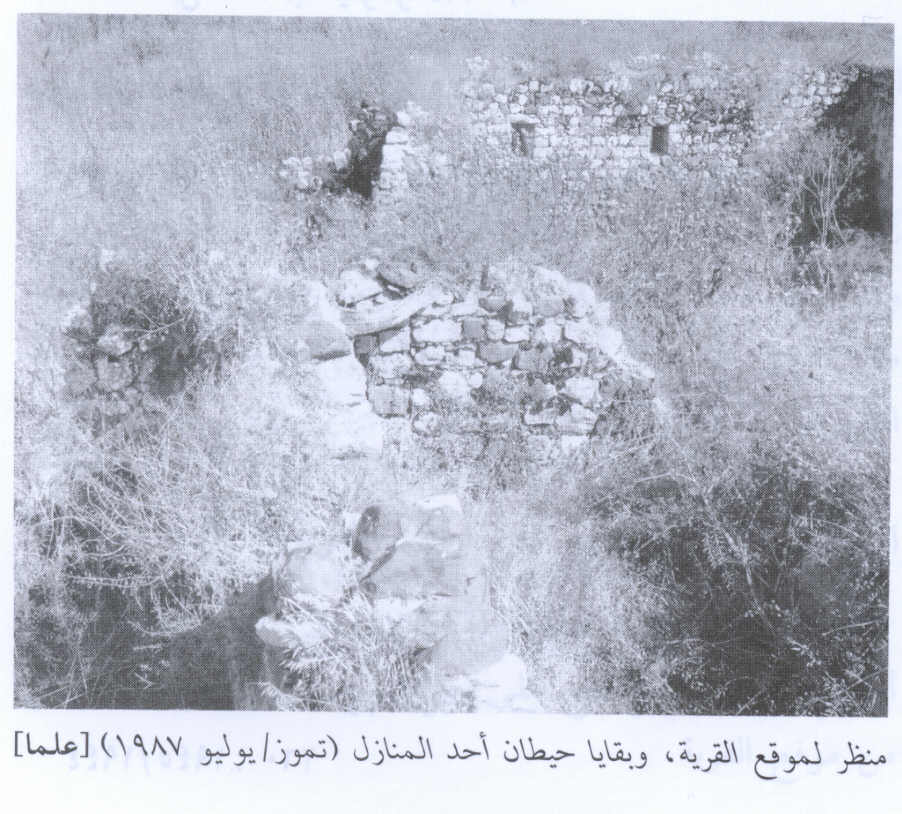 'Alma - علما : View of the village site with remains of house walls, 1987