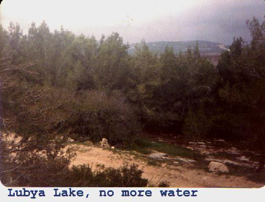 Lubya - لوبيا : Lubya pool  had been on this ground of Al-Ajayneh Clane