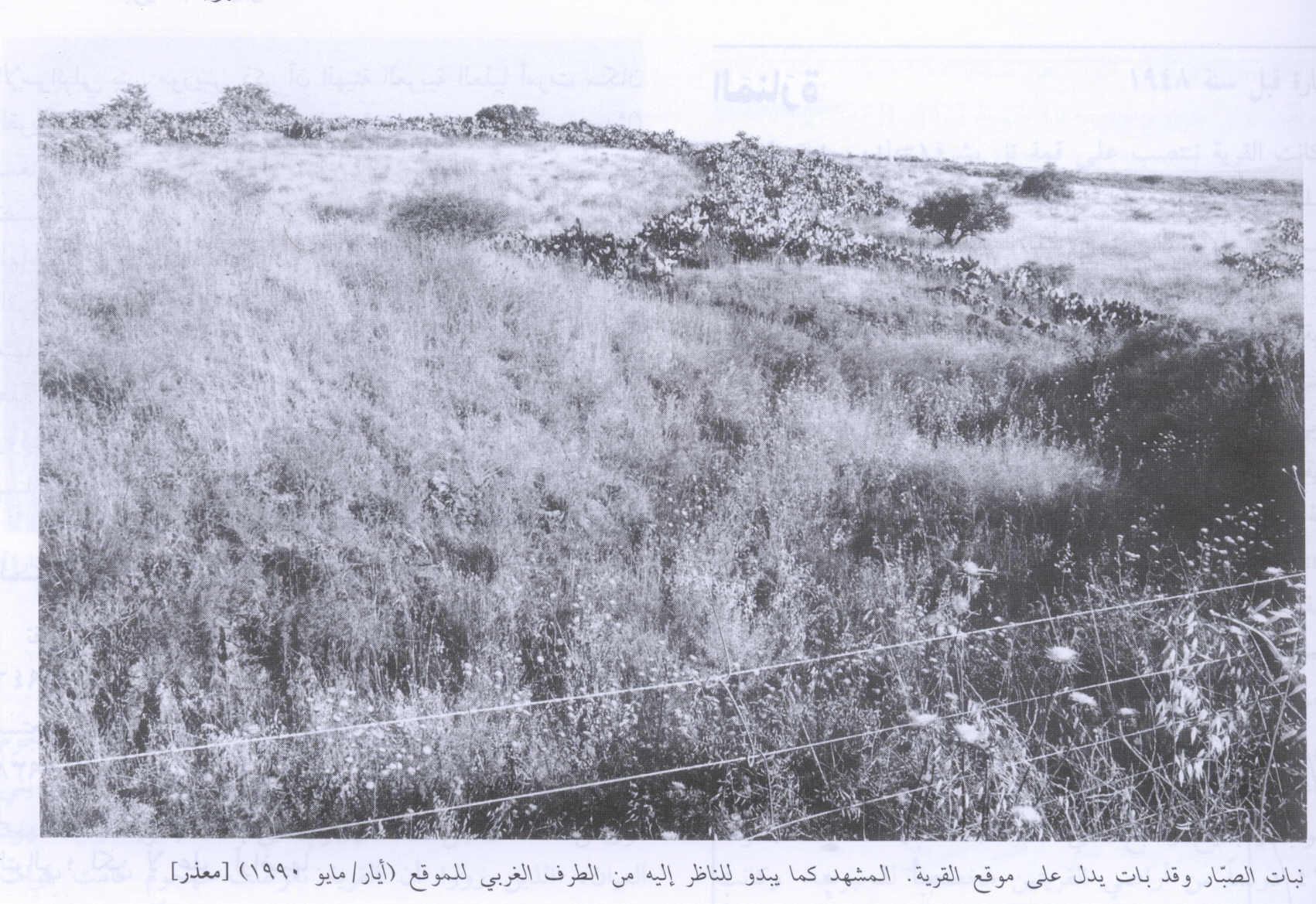 Ma'dhar - معذر : A view of the village site from the western edges of the village, 1990